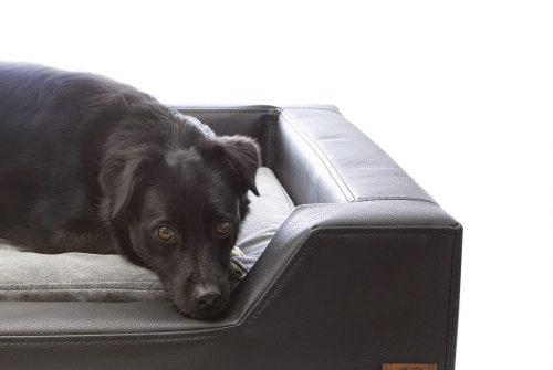 Hundebett-Hundekissen-Hundedecke-00012